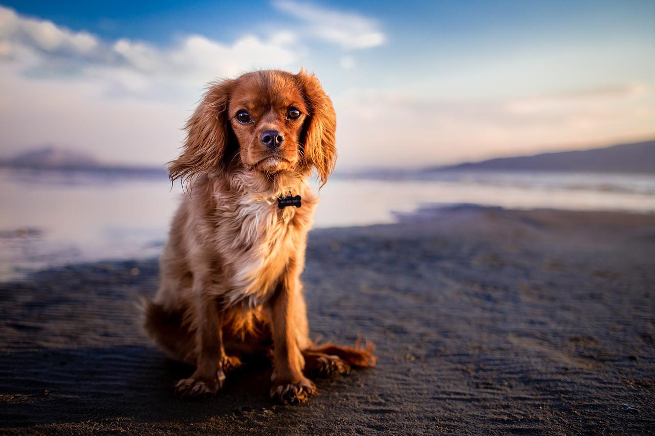 собака на березі