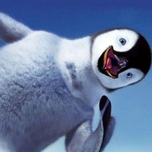 1+1 шукає пінгвінів!