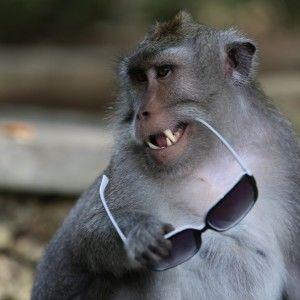 В Індонезії Дмитро Комаров познайомився з мавпами-злодюжками