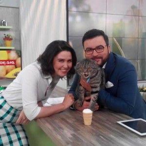 """Потішний кіт у студії """"Сніданку з """"1+1""""  сколихнув соціальні мережі (ФОТО)"""