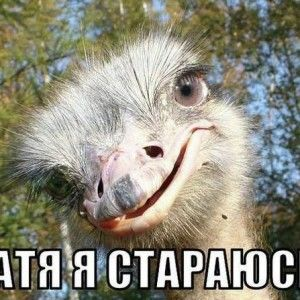 Соціальні мережі захопили Янукович та його страуси (ФОТО)