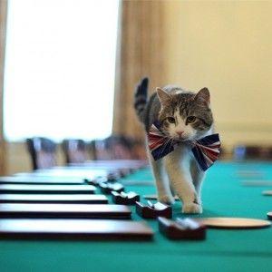 Актуальний інтернет: У Британії спалахнув скандал навколо кота прем'єра