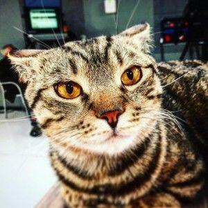 Кіт Іполіт шукає, з ким відсвяткувати Новий рік (ВІДЕО)