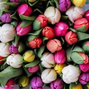 Квіти на 8 березня: Які букети в тренді (ВІДЕО)