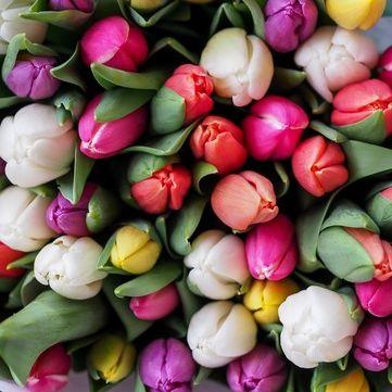Сніданок. Вихідний: Як правильно доглядати за тюльпаними (відео)