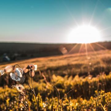 Літнє сонцестояння: Час загадувати бажання