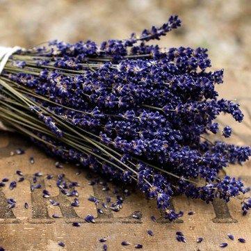 Лікарські трави та квіти: Корисні властивості та правила зберігання