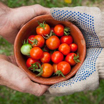 Поради дієтолога: чим корисні помідори