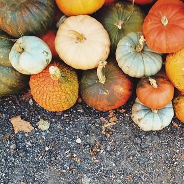 Поради дієтолога: Користь гарбузового насіння