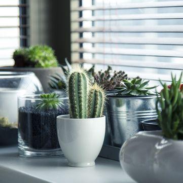 ТОП-6 кімнатних рослин, які очищують повітря