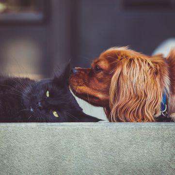 Коти чи собаки: Хто переміг у батлі від «Сніданку з 1+1»