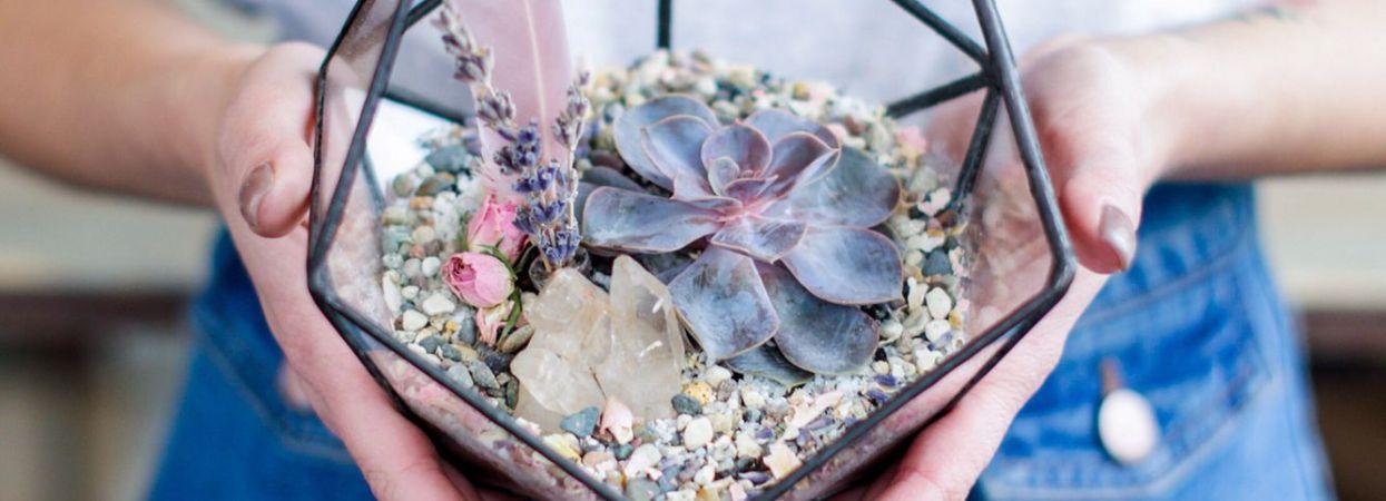 5 красивих кімнатних рослин 198a7482e0ef7