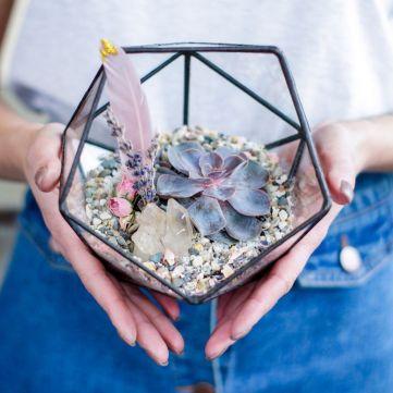 5 красивих кімнатних рослин, які додадуть затишку вашому дому