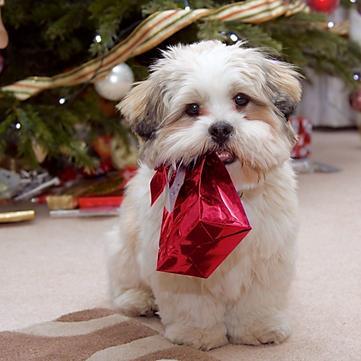 Як задобрити Жовтого Собаку: Прикмети на Новий рік