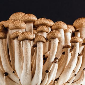 на фото гриби