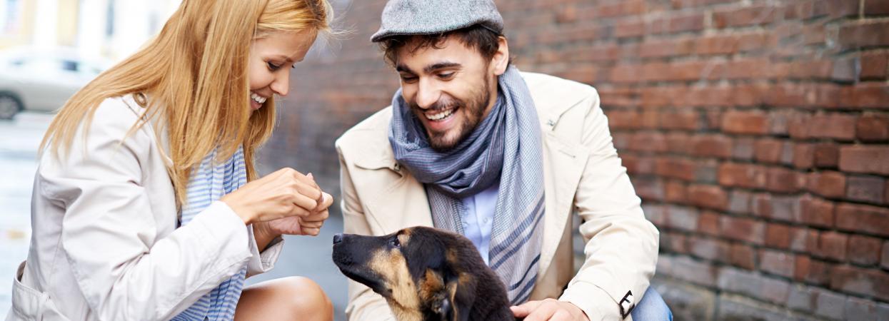 на фото пара молодых людей кормит  собаку