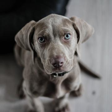 як захистити собаку від перегріванння