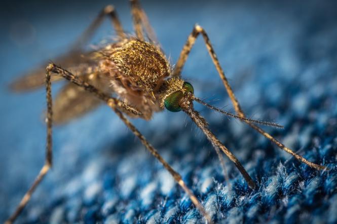 как защититься от комаров на море