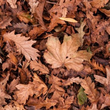 листя палять